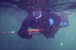 Spearfishing on Norfork