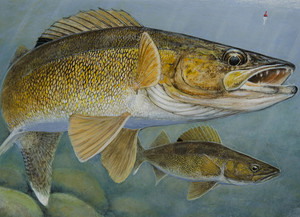No Need To Go North For Walleye Or Crappie