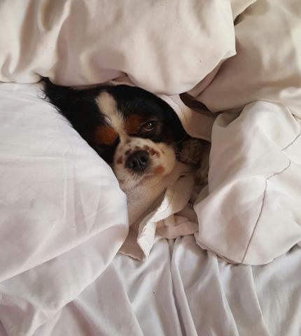 Sophia needs a sick day.