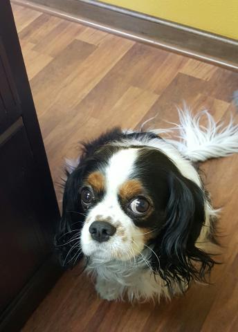 Sophie: Volt's Canine Ambassador