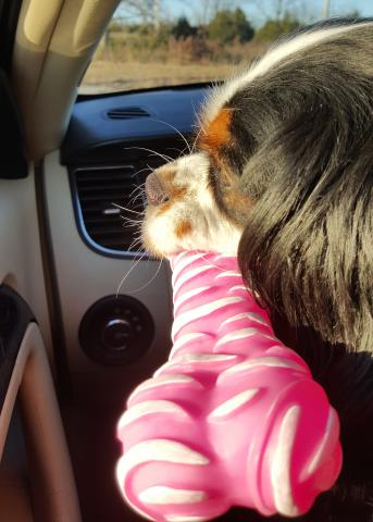 Sophia loves her pink bone.
