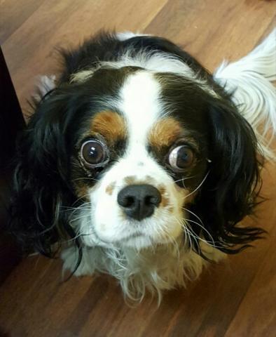 Sophie is shocked!