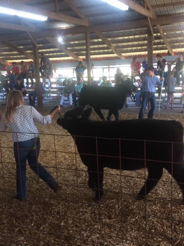 Livestock & Animals