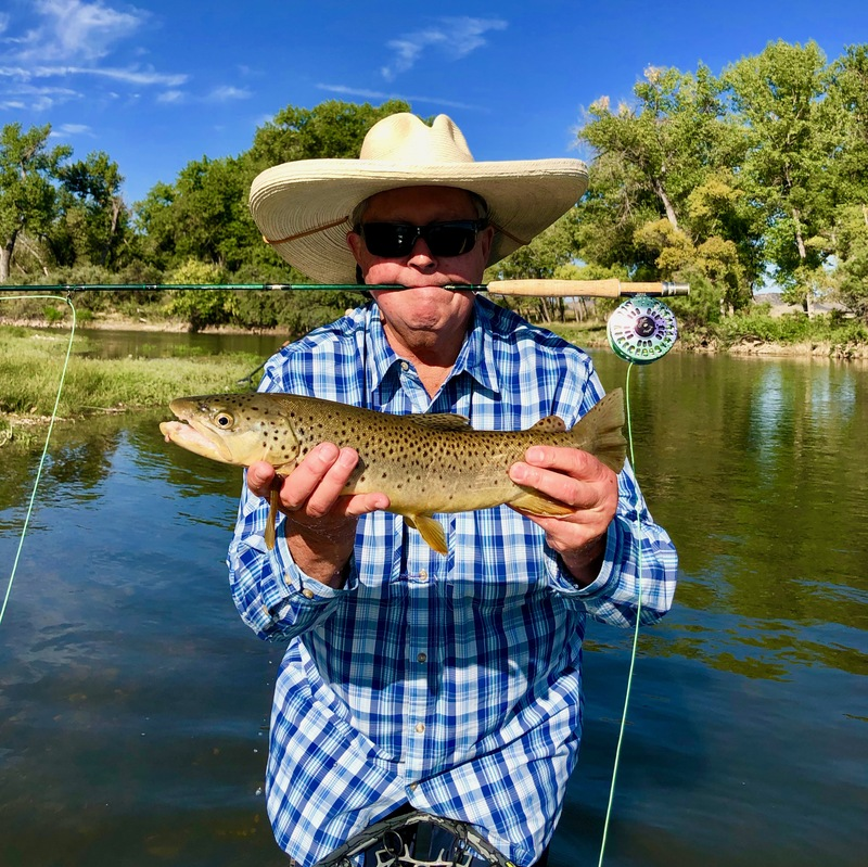 Big Horn River dry fly eater!