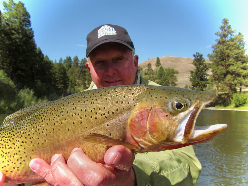 Westslope Cutthroat from the Clark Fork River, Montana
