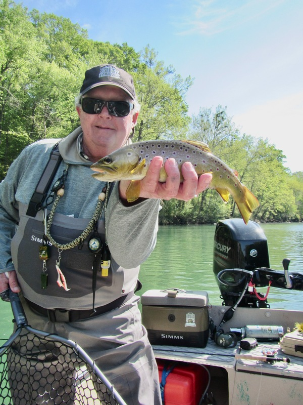 Brown Trout like Caddis!